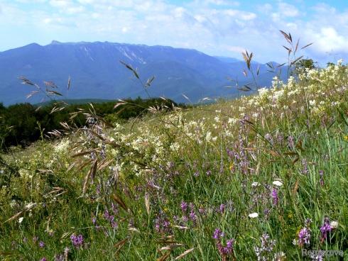 фиточаи, травяные сборы крыма